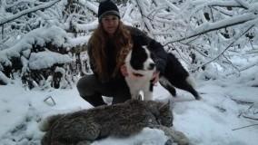 Lynx hunt