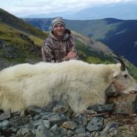 Mountain Goat Photo Gallery