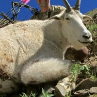 Mountain Goat Photo Gallery